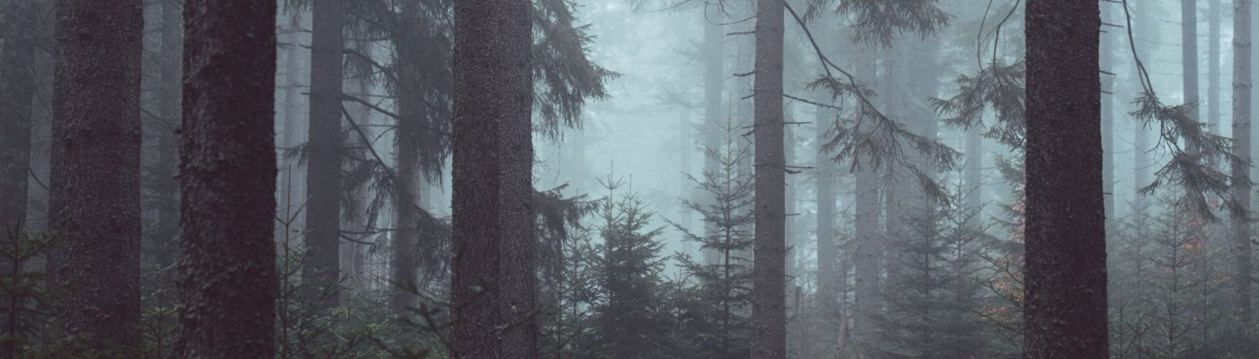 wp5224000-misty-morning-forest-wallpapers